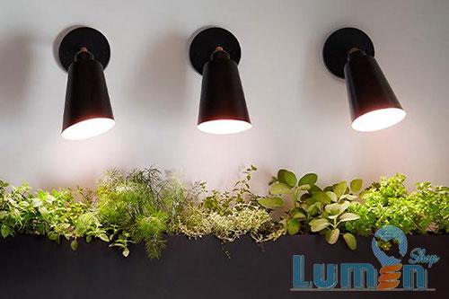لامپ رشد گیاه در محیط داخلی